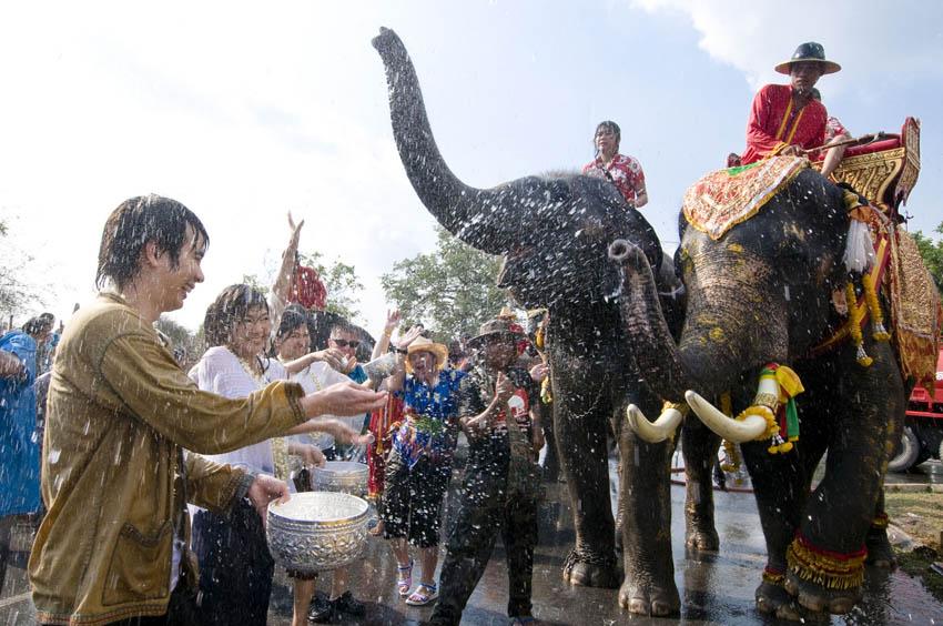 Songkran w Ayutthaya uczestniczą tez słonie!