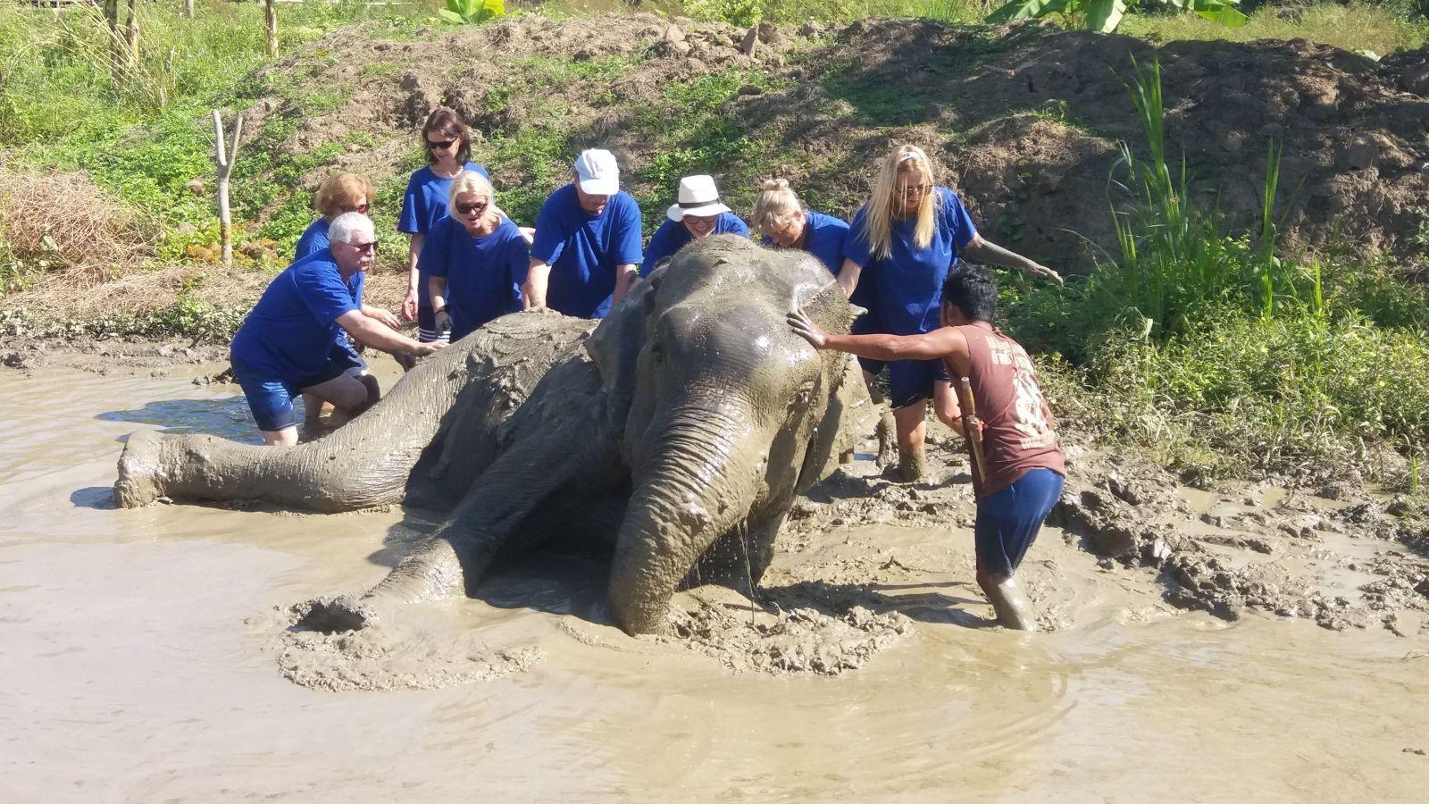 Kąpiel błotna ze słoniami.
