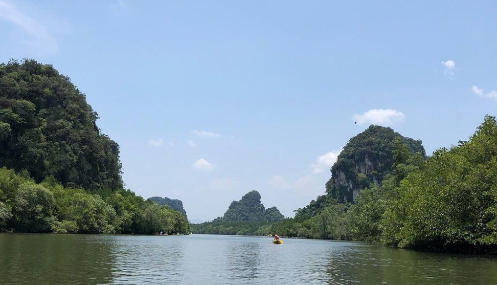 Spływ kajakami pośród lasów namorzynowych w Krabi.