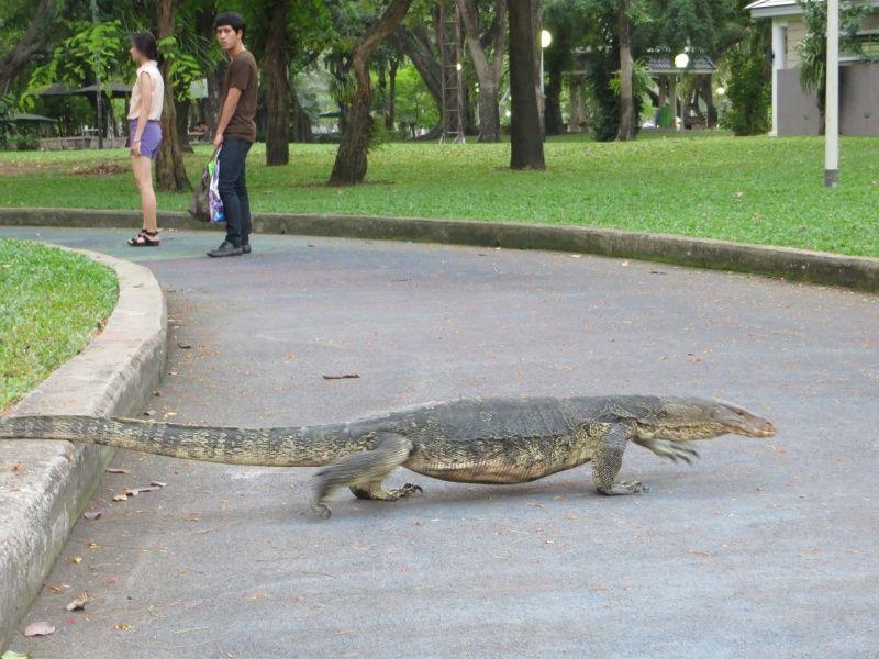 W Lumphini Park można spotkać warany