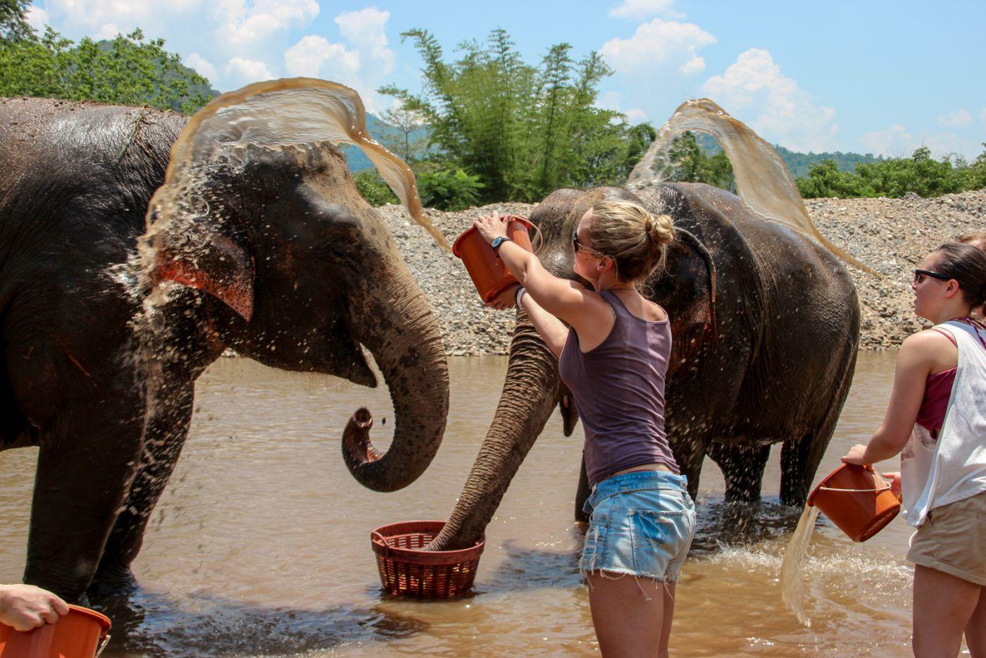 Mycie słoni w sanktuarium.