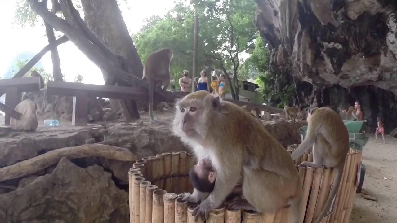 Małpy na plaży Phra Nang.
