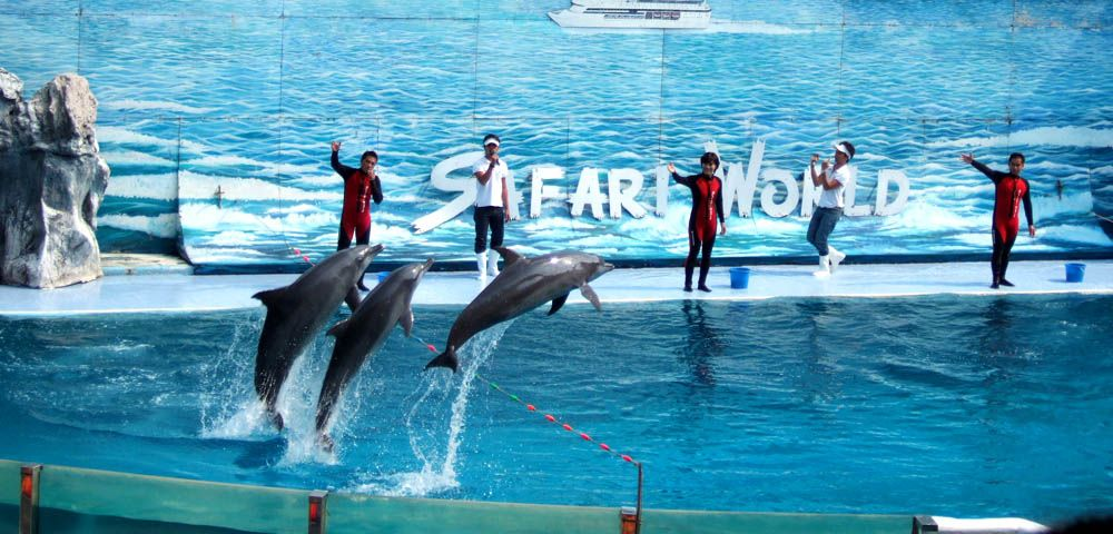 Safari World Pokaz delfinów