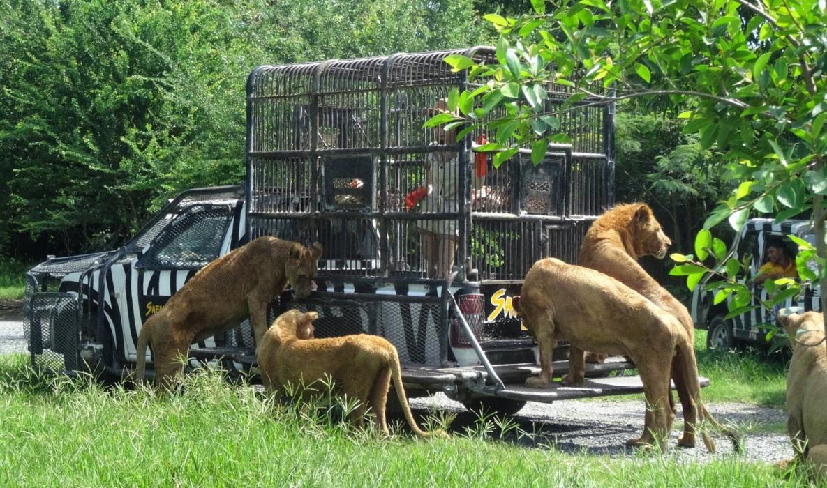Safari World Lwy