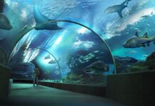 Długi tunel w Sea Life Bangkok Ocean World