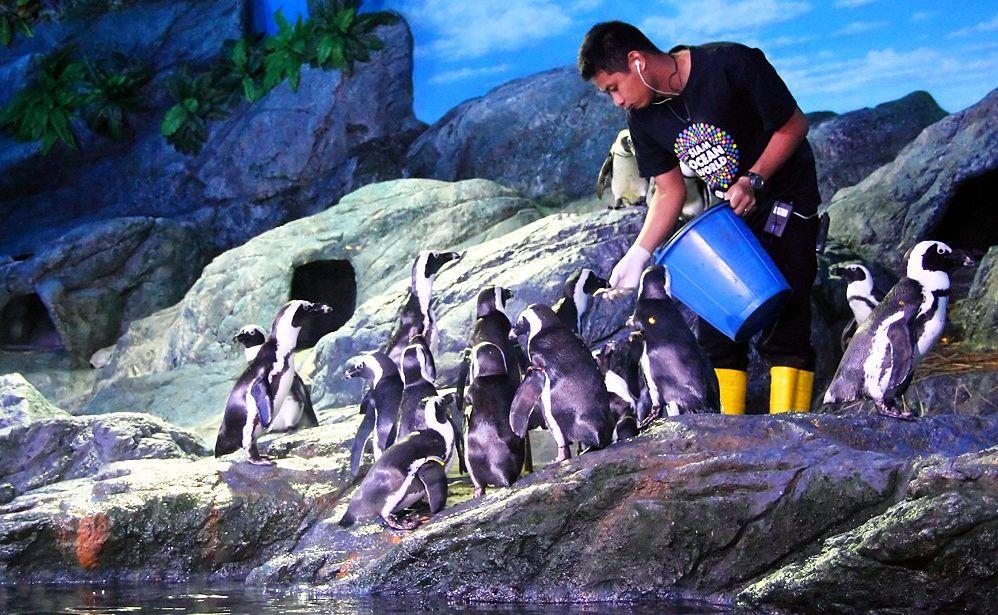 Karmienie pingwinów w Sea Life