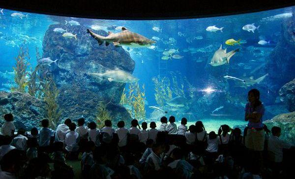 W Sea Life Bangkok Ocean World można podziwiać rekiny