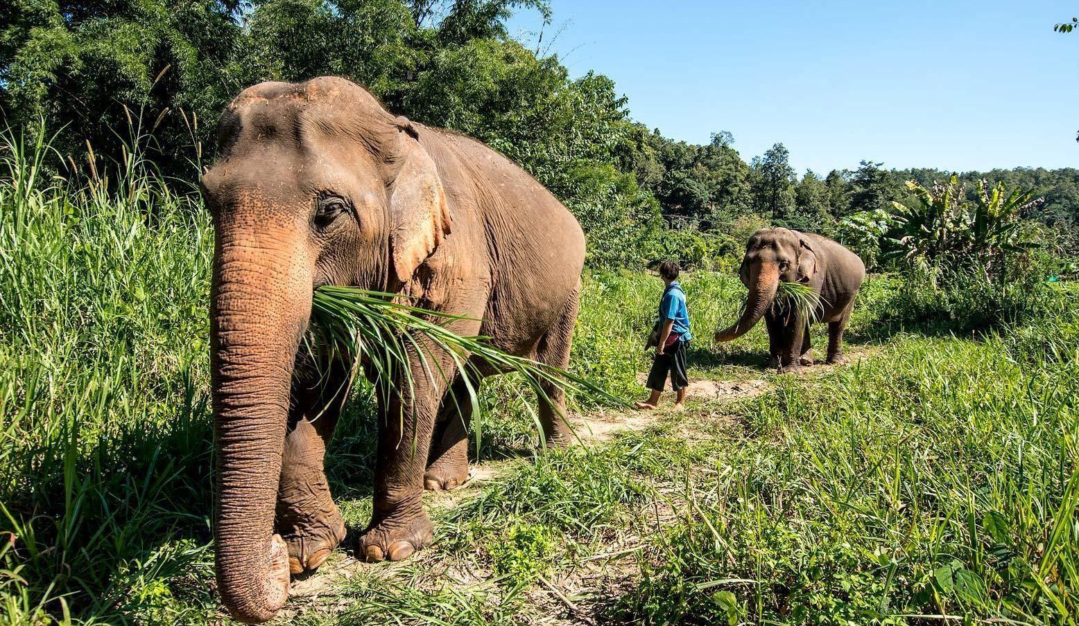 Słoń je dziennie do 200 kg.