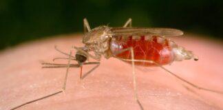 Tajlandia malaria